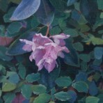 """Rhododendron"""